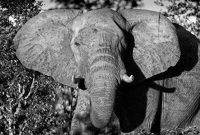 Hwange_Elephant_Drought-11