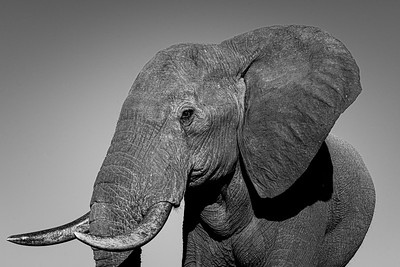 Hwange_Elephant_Drought-7