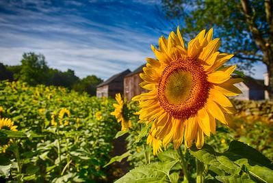 Buttonwood Farm 2012