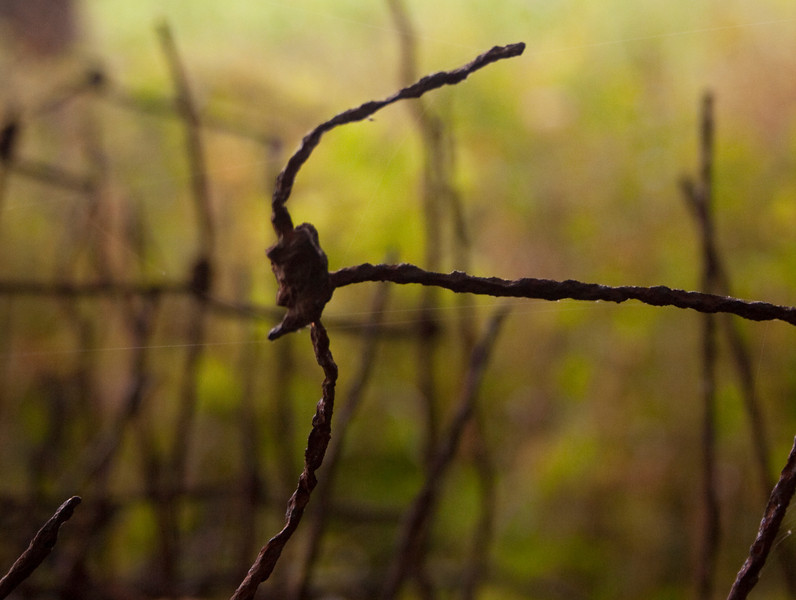 """""""Left Behind"""" Fencing left in the woods."""