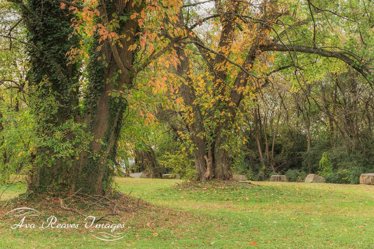 Peaceful Fall Colors