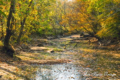 Autumn on The River Bed Trail