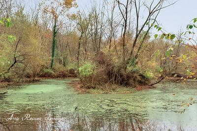 The Wetlands/Louise Burke Trail