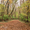 Louise Burke Trail