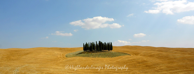 An island of cypress trees in the countryside of Tuscany, Italy