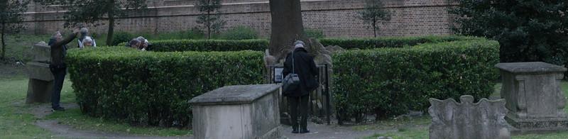Hardy's tree