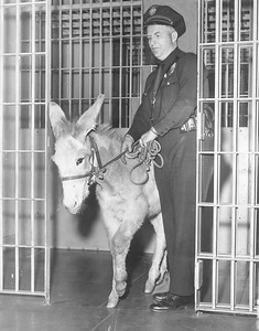 1956, Donkey gets booked into Ann Street Shelter