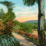 Flowery Pathway
