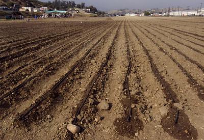 2005, Irrigation