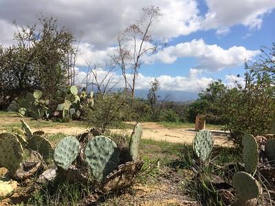 2014, Cacti