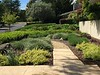 No more lawn to mow!  Low maintenance, drought tolerant