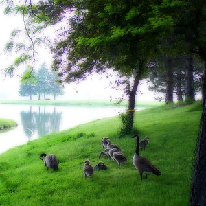 Family Outing Andrew Haydon Park, Ottawa