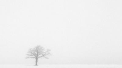 lone tree Experimental Farm, Ottawa
