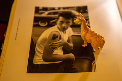 Bruce Davidson fascinates llama of the night