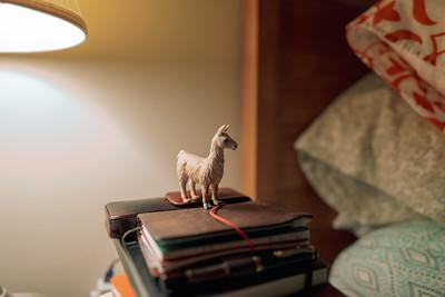 llama of the night