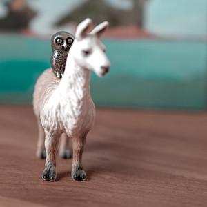 llama of the night provides transportation