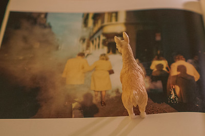 llama of the night—don't photobomb Joel Meyerowitz's masterpiece! (even if your coat does kind of match.)
