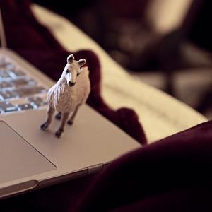 keyboard accompaniment llama of the night