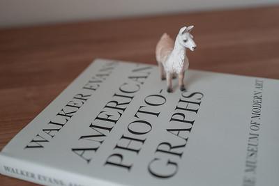 llama of the night got a new book