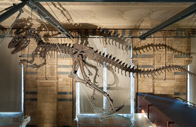 Natural History Museum - dinosaur