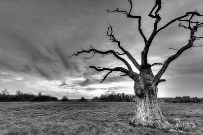 23 - Mundon Oaks Photography (c) Marion Sidebottom