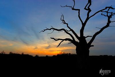 24 - Mundon Oaks Photography (c) Marion Sidebottom