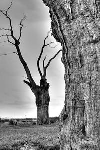 10 - Mundon Oaks Photography (c) Marion Sidebottom