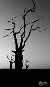 18 - Mundon Oaks Photography (c) Marion Sidebottom