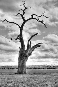 12 - Mundon Oaks Photography (c) Marion Sidebottom