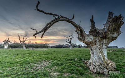 25 - Mundon Oaks Photography (c) Marion Sidebottom