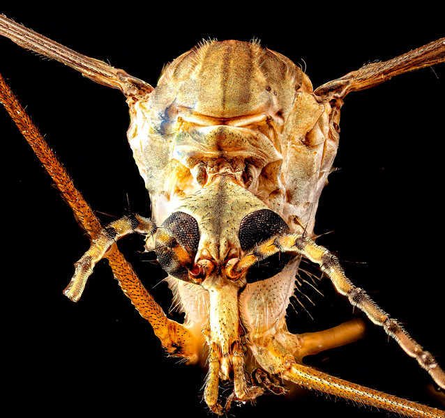 Spider fly