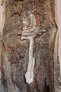 Cross carved in bark, Mission San Miguel Arcangel, CA