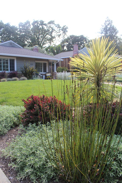 Modern and Drought Tolerant