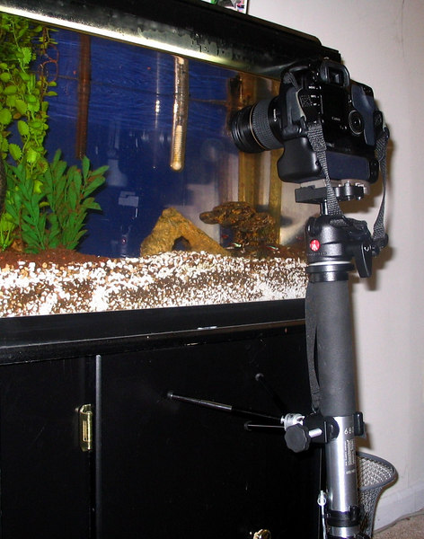 """And here it is in use.  Granted, this isn't the """"Georgia Aquarium"""" but you get the idea.  I extended 2 of the 3 legs and set them against the cabinet.  The swivel head on the monopod allows me to pan and tilt the camera without moving the monopod."""