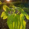 Leaf Shadow (9 of 22)