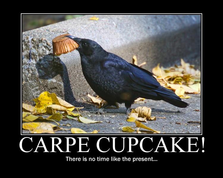 carpe cupcake