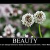 beauty 4