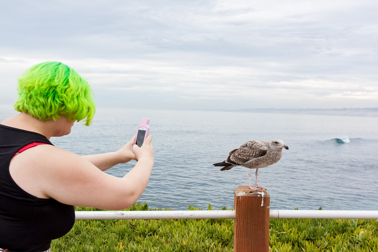 Friendly Seagull in La Jolla