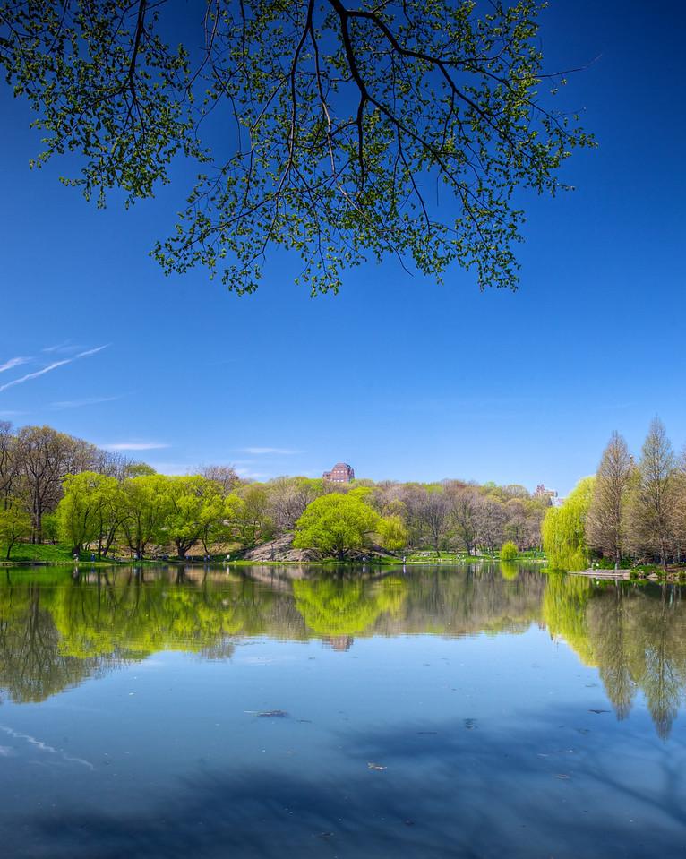 Spring-time in Central Park