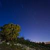 The oak tree under the stars