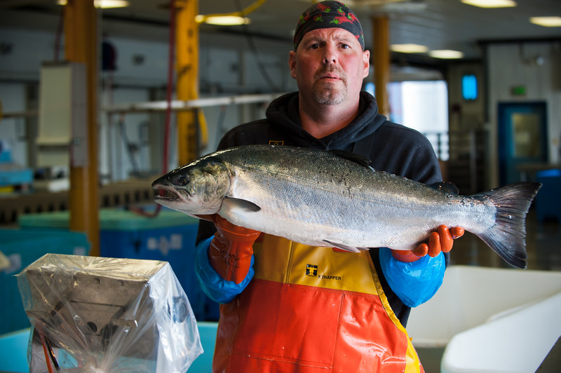 Processor displays king salmon, sitka Alaska