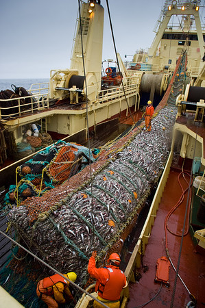 The net haul, Bering Sea, Alaska