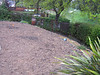 Northgate backyard, before
