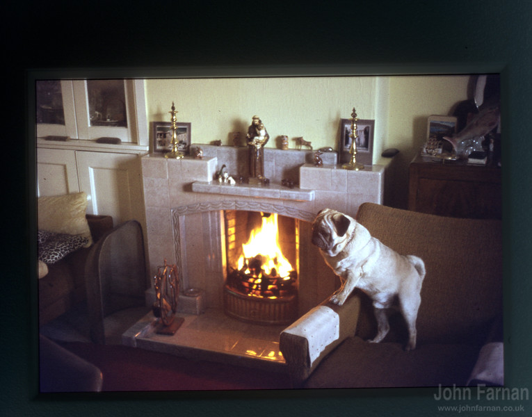 A Pug Dug in front of a roaring fire