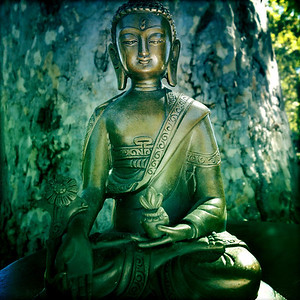 Buddha and the Sycamore