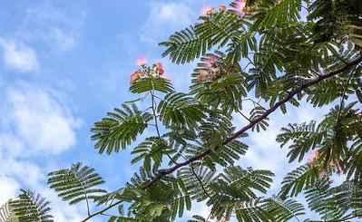 fern against the sky