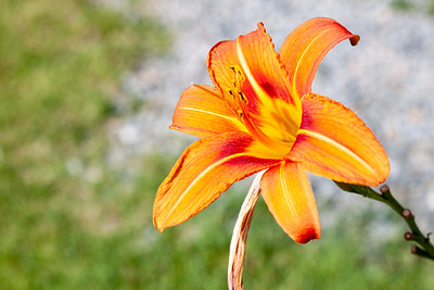 very orange flower