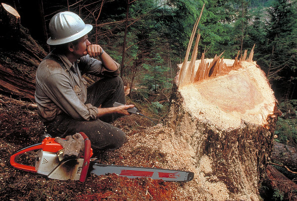 Logger, Olympic National Forest