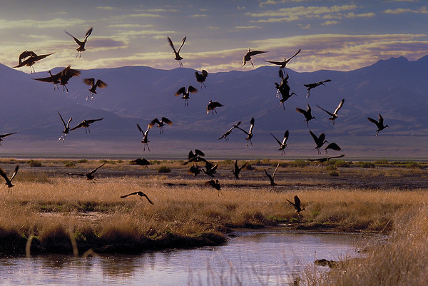 Stillwater National Wildlife Refuge, Nevada