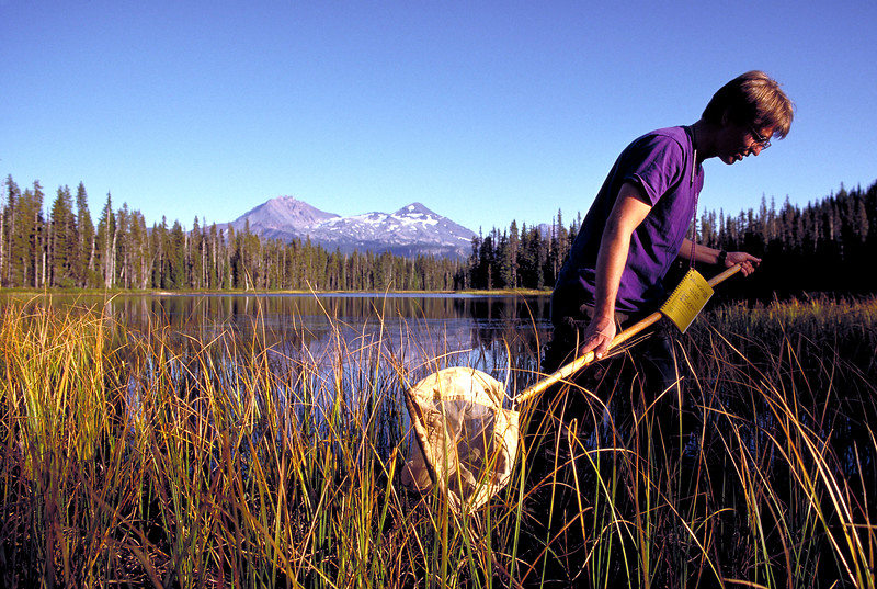 Hunting for Endangered Frogs